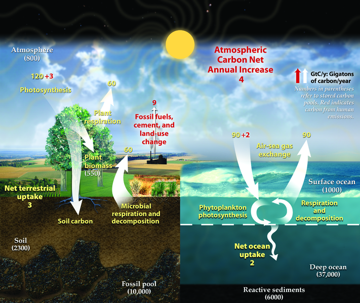 www.destinationfeed.com_Diagram_showing_a_simplified_representation_of_the_Earth's_annual_carbon_cycle_(US_DOE)