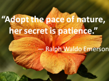 Quote for the Day: Pace of nature