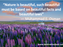 Quote of the Day: Nature is Beautiful
