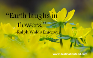Quote of the Day: Earth Laughs